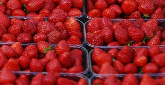 After the case of the kiwis, italians, false strawberry French in the Lot