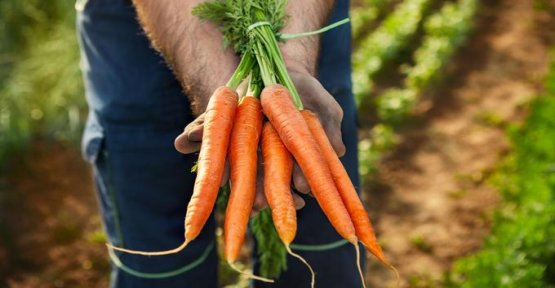 Of Aucy wants to double the weight of its own production of organic vegetables