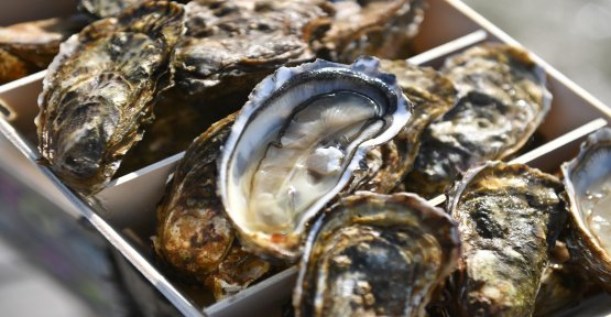 Oysters: concern for the appellation of Marennes-Oléron after a court decision