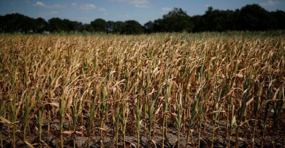 Drought : the water restrictions are a burden on the farmers