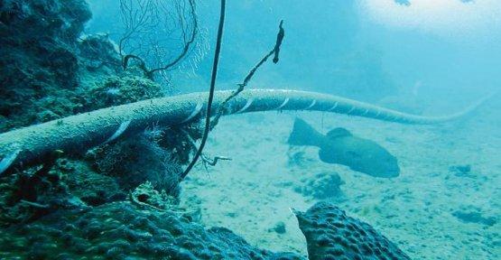 Internet : the Gafa weave their Cloth under the sea