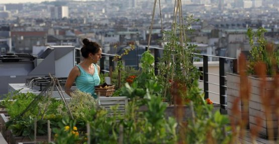 Urban agriculture, between promises and disappointments