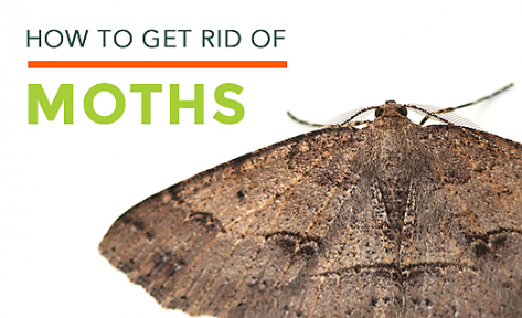 How to get rid of moths?