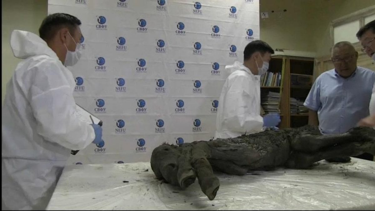 Colt prehistoric re-emerges intact from siberian permafrost
