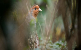 Biological diversity: the year of The partridge